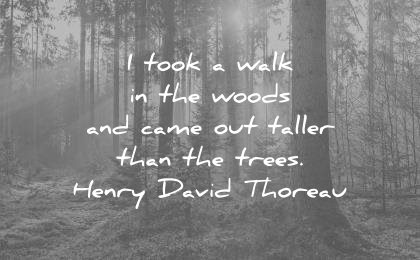 nature quotes took walk the woods came out taller than trees henry david thoreau wisdom